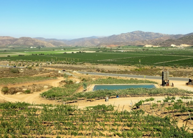 Encuentro Guadalupe offers some of the best views of the valley, Photo credit: Lola's Cocina