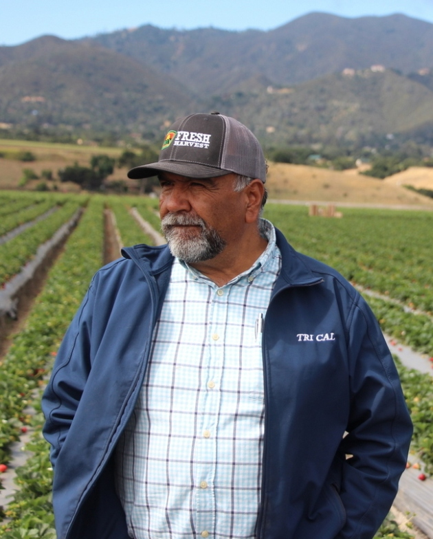 Jesús Alvarado, Fresalva Berry, LLC #CAStrawberries