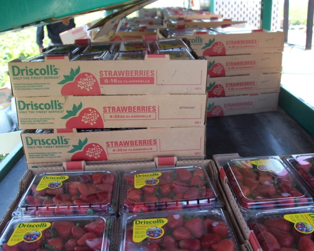 Strawberries ready to be shipped.