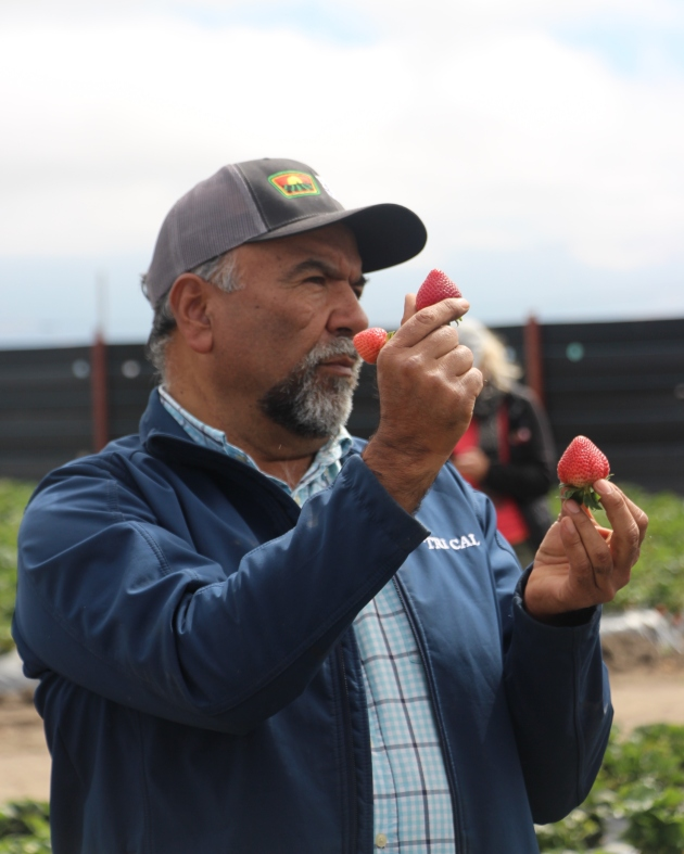 Jesús Alvarado explains the different stages of strawberry growth.